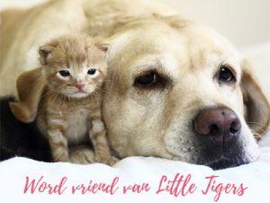 word vriend van little tiger