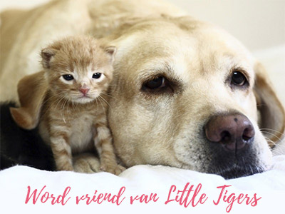 word vriend van little tiger