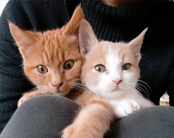 Ava & Asher